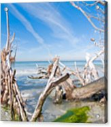 Driftwood C141354 Acrylic Print