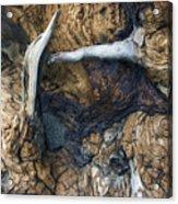 Driftwood Canyon II Acrylic Print