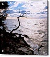 Driftwood Dragon-barnegat Bay Acrylic Print