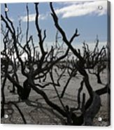 Driftwood Forest Acrylic Print