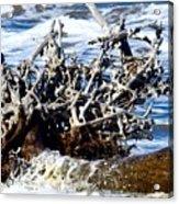 Driftwood Lace Acrylic Print