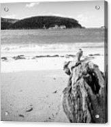 Driftwood On Beach Black And White Acrylic Print
