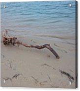 Driftwood On Ocean Beach Acrylic Print