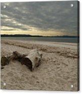 Driftwood On West Sands Acrylic Print