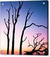 Driftwood Sunrise Acrylic Print
