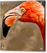 Dripping Flamingo Acrylic Print