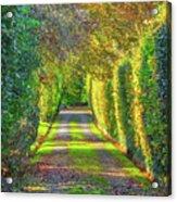 Drive Into Autumn Acrylic Print