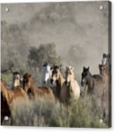 Driving The Horses Acrylic Print