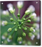 Drop Of Life Acrylic Print