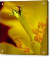 Drop On Flower Stalk Acrylic Print