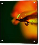 Droplet Off A Rose Petal Acrylic Print
