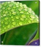 Droplets Of Hope Acrylic Print