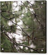 Droplets On Branches Acrylic Print