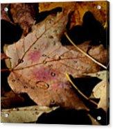 Droplets On Fallen Leaves Acrylic Print