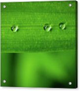 Droplets On Grass Acrylic Print