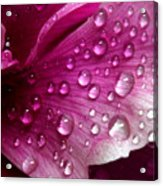 Droplets On Peony 1 Acrylic Print