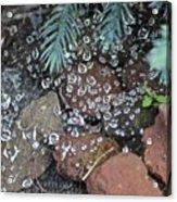 Droplets Over Web Acrylic Print