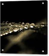 Droplets2 Acrylic Print