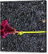 Dropped Flower Acrylic Print