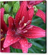 Dropplet Lilly Acrylic Print