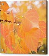 Drops Of Autumn Acrylic Print