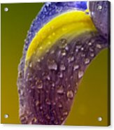 Drops Of Bliss Acrylic Print