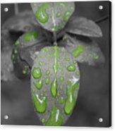 Drops Of Color 1 Acrylic Print