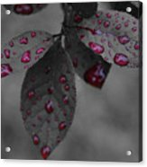 Drops Of Color 2 Acrylic Print