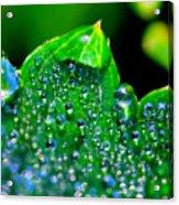 Drops On Leaf Acrylic Print