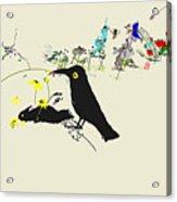 Drunkin Birds Come Calling Acrylic Print