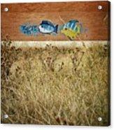 Dry Aquarium Acrylic Print