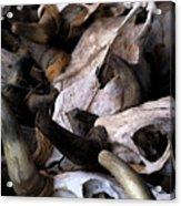 Dry As Bones Acrylic Print