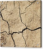 Dry Cracked Earth And Green Leaf Acrylic Print