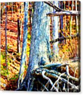 Dry Docked Acrylic Print by Susie Weaver