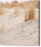 Dry Dune Grass Plants Acrylic Print