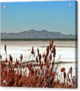 Dry Grasses At The Great Salt Lake Acrylic Print