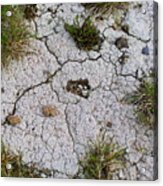 Dry Ground Acrylic Print