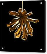 Dry Leaf Collection 4 Acrylic Print