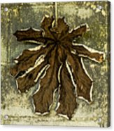 Dry Leaf Collection Natural Acrylic Print