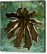 Dry Leaf Collection Wall Acrylic Print