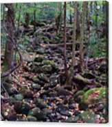 Dry River Bed- Autumn Acrylic Print