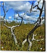 Dry Tree Acrylic Print