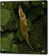 Drying Leaf In The Forest Acrylic Print