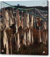 Drying Pieces Of Salt Cod In Bonavista, Nl, Canada Acrylic Print