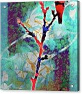 Dual Roses Acrylic Print