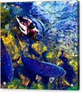 Duck And Carp Wc 2  Acrylic Print