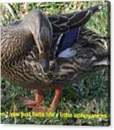 Duck Annoyances Acrylic Print