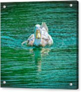 Duck - C Acrylic Print