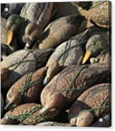 Duck Decoys On Burano Acrylic Print