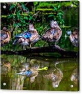 Duck Duck Duck Duck Acrylic Print